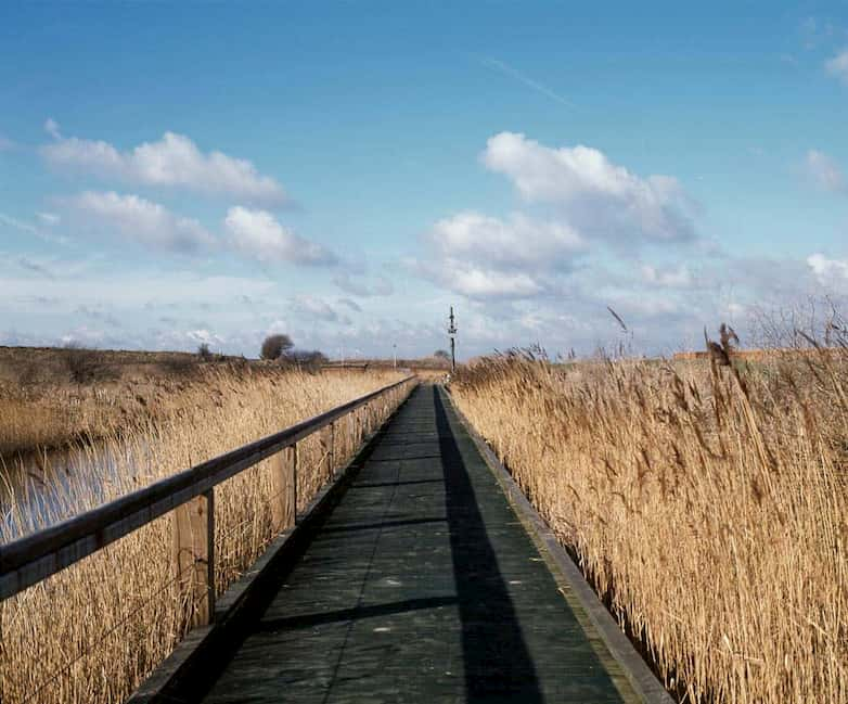 South trail boardwalk, close to the Thames river wall, seen under an open sky, typical of the marsh landscape