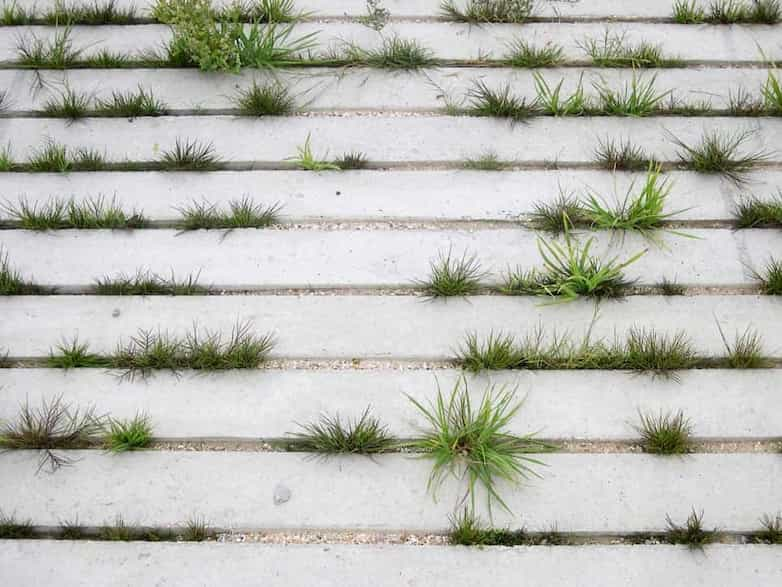 Detail of wheelchair access ramp to new teaching decks, grasses grow between the concrete planks.