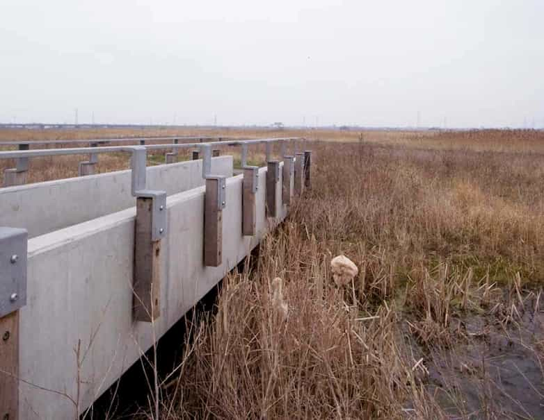 Reeded ditch with new precast concrete footbridge on the Thames link path.